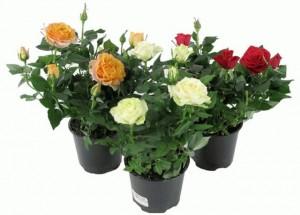 подарок на 8 марта - горшок с цветами