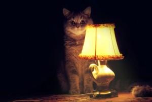 гадать нужно в темной комнате с кошкой