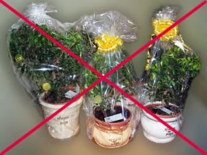 растения в горшке не вариант подарка