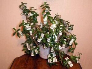 доллары среди листов денежного дерева