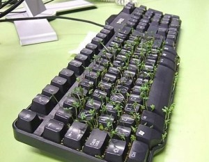 клавиатура самодельная с живыми растениями