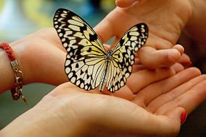 тост про мудреца и бабочку