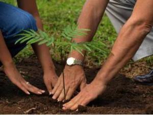 традиция садить дерево