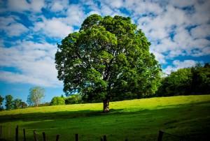 дерево - символ 5 годовщины свадьбы