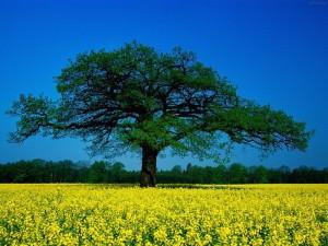 красное дерево как символ 27 годовщины