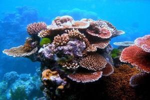 Обряды коралловой свадьбы