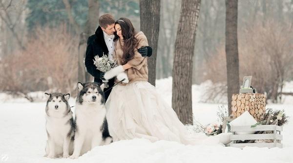 зимняя фотосессия на свадьбе с собаками