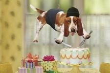 как отметить свой день рождения необычно и недорого